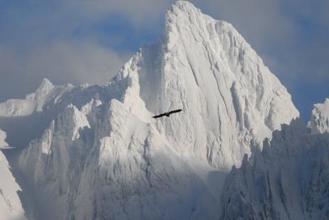 berge-mit-vogel